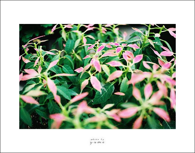 Nikon F3hp,  MF 35mm f2,  NPS160