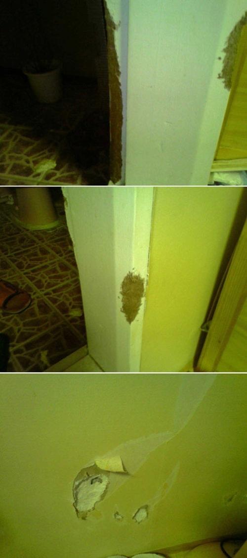 우리집에는 쥐 아니;; 비글이 살고 있어요~~